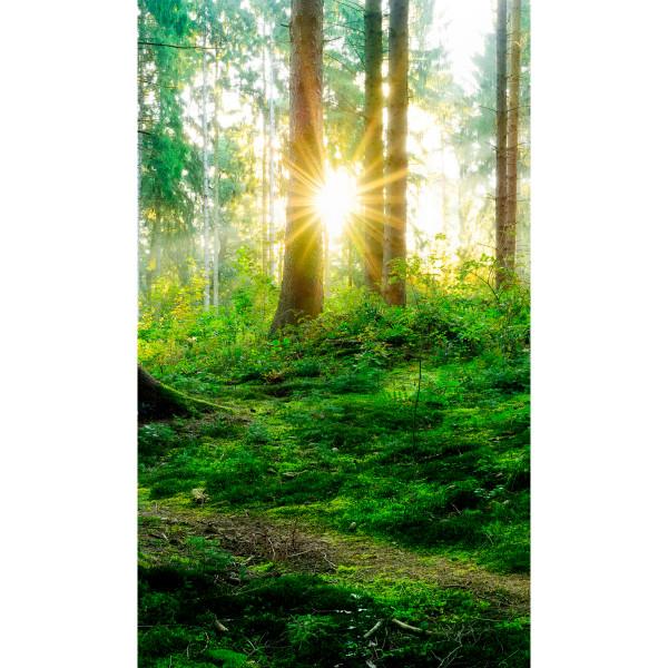 DK Rückwand Flat M in glanz oder matt | Sonnenwald | Antibakterielle Oberfläche