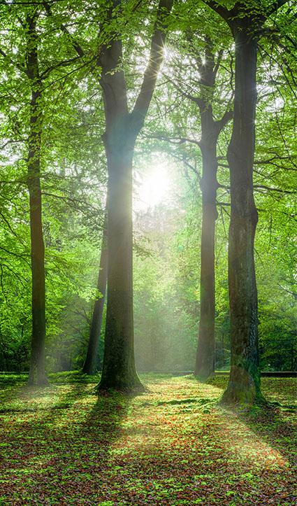 Dekor Wald (Flat E)