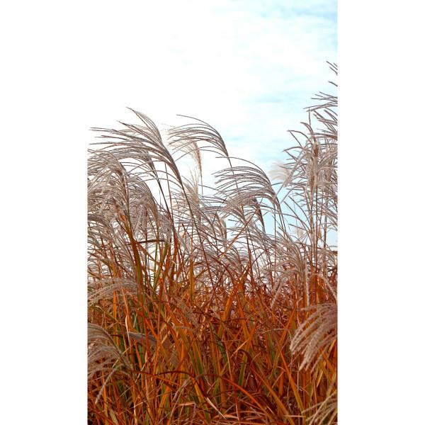 DK Rückwand Flat E Gras im Wind | Dekor: einseitig