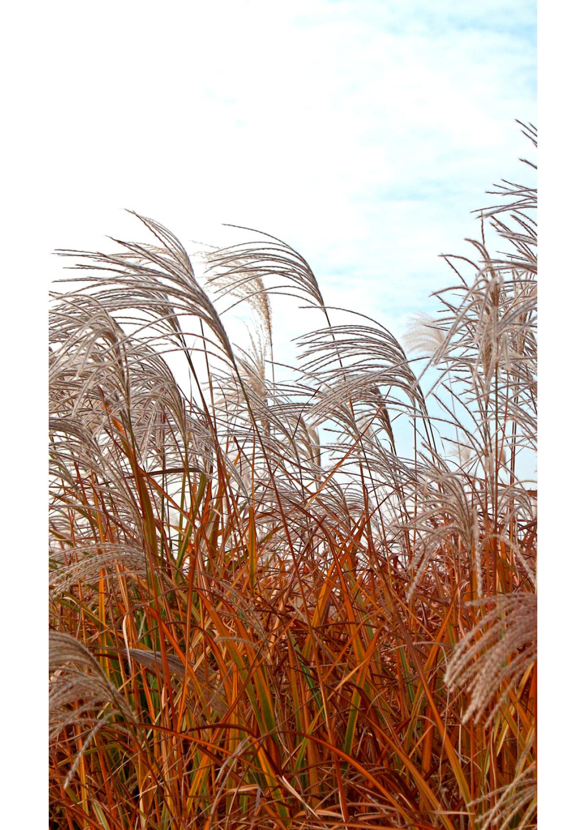 Dekor Gras im Wind (Flat E)